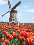 Holland nap
