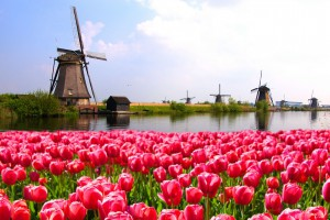 10d-beauty-of-holland-(eu10a)